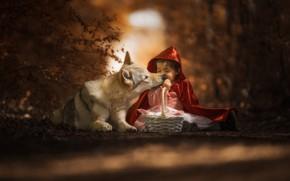 Обои лес, морда, свет, красный, поза, темный фон, серый, настроение, корзина, волк, ребенок, ситуация, собака, дружба, ...