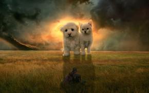 Картинка поле, кошка, небо, тучи, рендеринг, котенок, фантазия, девушки, коллаж, собака, пара, щенок, гиганты, фотоарт