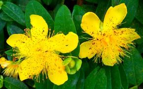 Картинка цветы, тычинки, жёлтые