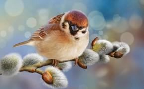 Картинка блики, фон, птица, фотошоп, ветка, воробей, птичка, верба, воробушек