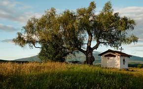 Картинка поле, лето, небо, трава, свет, горы, дерево, ветви, листва, крест, луг, домик, часовня, крона, церквушка, …
