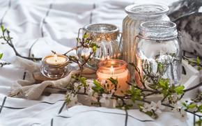 Картинка ветки, стиль, свечи, банка, цветки
