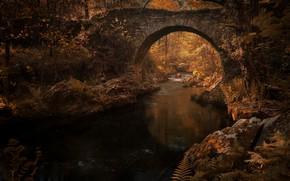 Картинка осень, листья, вода, свет, деревья, ветки, мост, отражение, река, ручей, камни, заросли, растительность, листва, канал, …