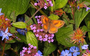 Картинка макро, цветы, бабочка, ярко