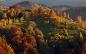 Картинка природа, деревья, Румыния, Александр Перов, холмы, осень, пейзаж