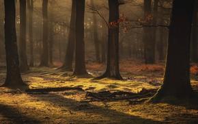 Картинка осень, лес, листья, свет, деревья, ветки, туман, ручей, стволы, поляна, коряги