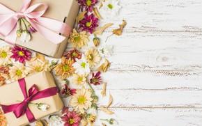 Картинка цветы, подарок, colorful, хризантемы, flowers, gift box