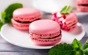 Картинка малина, печенье, малиновые, macaron, Iryna Melnyk