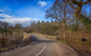 Картинка дорога, пейзаж, мост, природа, красота