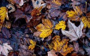 Картинка листья, листва, много, осенние листья