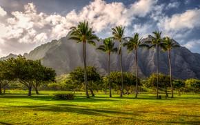 Картинка горы, тропики, пальмы, Гавайи