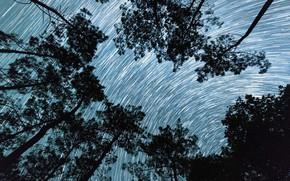 Картинка деревья, Франция, звёзды, Дордонь