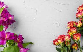 Картинка цветы, альстамерия, розы, фон