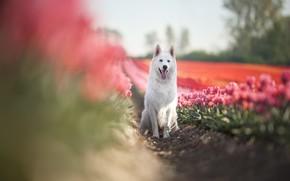Картинка цветы, друг, собака