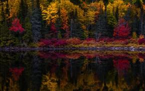 Картинка осень, лес, деревья, озеро, отражение, камни, берег, водоем, краски осени, багрянец, зеркальное, осенняя природа, яркая …