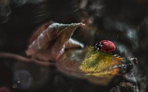 Картинка макро, лучи, природа, лист, божья коровка, жук, арт, боке, Smirnova Olga