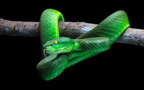 Обои green, snake, wood