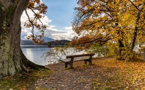 Картинка осень, лес, небо, листья, солнце, облака, деревья, река, берег, Германия, скамейки, жёлтые, Seehausen