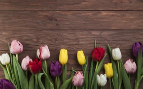 Картинка цветы, colorful, тюльпаны, wood, flowers, beautiful, tulips, spring, multicolored