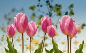 Картинка весна, Тюльпаны, сад.