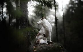 Картинка лес, друг, собака