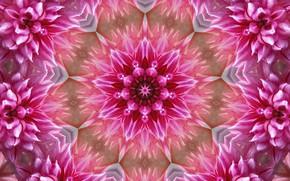 Картинка цветы, фон, узор, графика, текстура, digital art, симметрия, мандала