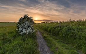 Картинка дорога, поле, лето, закат, забор