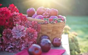 Картинка осень, свет, цветы, природа, стол, яблоки, букет, сад, урожай, красные, натюрморт, корзинка, хризантемы, боке