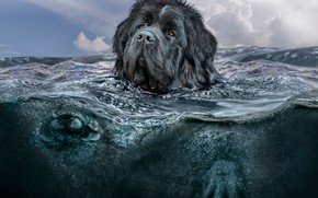 Картинка море, небо, взгляд, морда, вода, облака, природа, рендеринг, волна, водолаз, собака, лапы, купание, арт, пловец, …