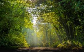 Картинка дорога, зелень, лес, свет, деревья, туман, парк, ветви, дымка, кроны