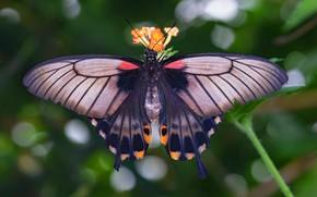 Картинка макро, фон, узор, бабочка, крылья, насекомое, боке
