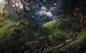 Картинка деревья, горы, река, долина, Южная Америка