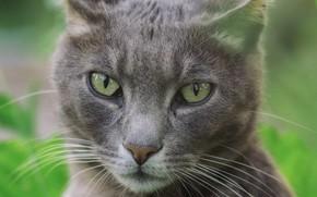 Картинка глаза, кот, взгляд
