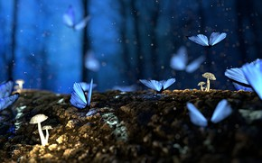 Картинка Nature, Macro, Forest, Butterflies, Mushrooms