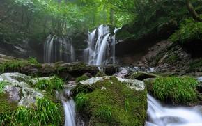 Картинка зелень, лес, лето, трава, деревья, природа, берег, водопад, замшелые камни