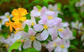 Картинка Весна, Spring, Цветение, Flowering