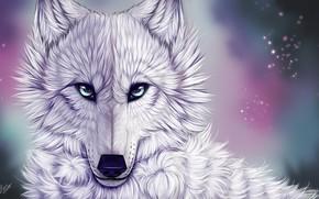 Картинка взгляд, волк, белый волк, myarukawolf, by myarukawolf