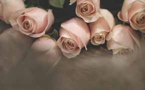 Картинка розы, букет, розовые, бледно-розовые