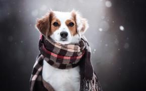 Картинка друг, собака, шарф