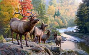 Картинка осень, лес, природа, поза, река, камни, берег, листва, рисунок, картина, арт, дымка, живопись, олени, водоем, …