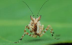 Картинка макро, фон, богомол, насекомое