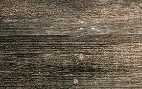 Картинка цвет, структура, древесина