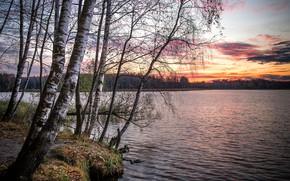 Картинка осень, лес, деревья, закат, ветки, пруд, стволы, берег, вечер, березы, водоем, березки