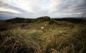 Картинка поле, лето, ромашка
