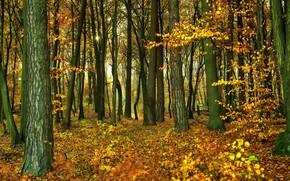 Картинка осень, лес, листва, forest
