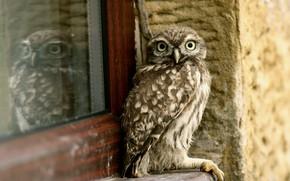 Обои дом, сова, птица, окно