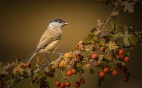 Картинка осень, птица, ветка