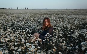 Картинка поле, лето, взгляд, девушка, природа, поза, фото, ромашки, шатенка, Аляпина Екатерина
