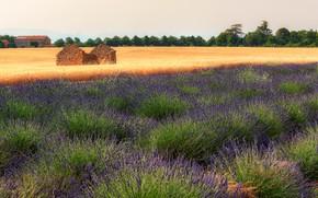 Картинка поле, лето, небо, деревья, цветы, природа, дом, Франция, домик, руины, много, лаванда, сиреневые, разрушенный, плантация, …