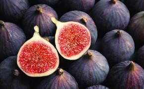 Картинка red, fruit, fig